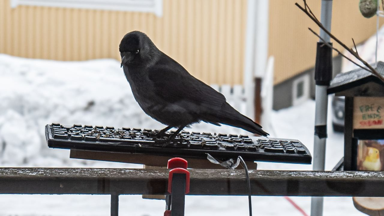 Bird on a keyboard